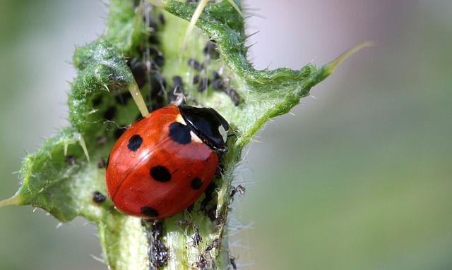 fight aphids