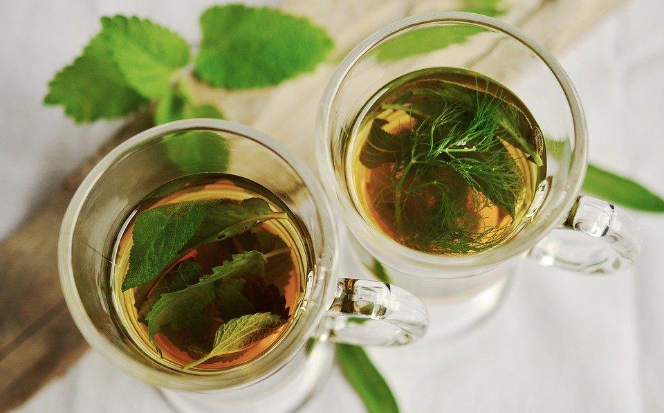 leaf tea against aphids